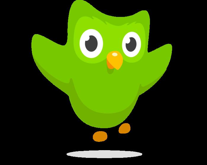 Duolingo logo, owl