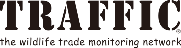 Traffic International Logo